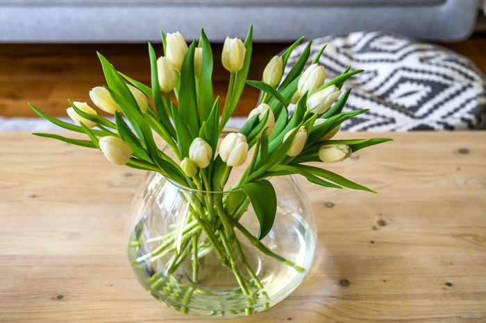 Tulips in living room 4 Tulips Beauty In Nature Close-up Day Flower Flower Head Fragility Freshness Indoors  Leaf Nature No People Plant Table Tulips Flowers White Tulips