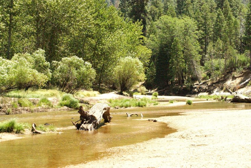 Outdoor Photography Sunny Day America American Dream USAtrip Usa Landscape Landscape River View Check This Out Showcase: July Beautiful Nature Nature Photography Naturelovers Awesomness Nature Beauty Yosemite National Park Yosemitenationalpark Yosemite National Park, California California Californiaadventures