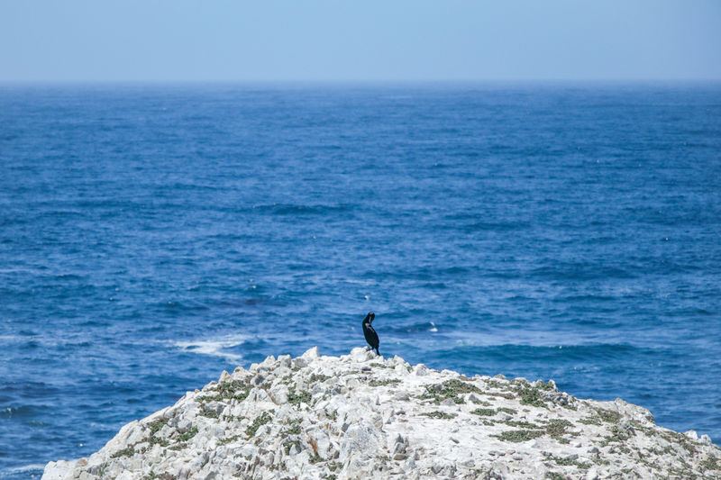 alone time Bird Seabirds Blue Rock Nature Elevated View California Wildlife Wildlife & Nature Ocean Water Sea Paddleboarding Full Length Men Athlete Adventure Sport Clear Sky Extreme Sports Wave Shore Horizon Over Water Crashing Surf Rocky Coastline Tide Seascape Coast Beach
