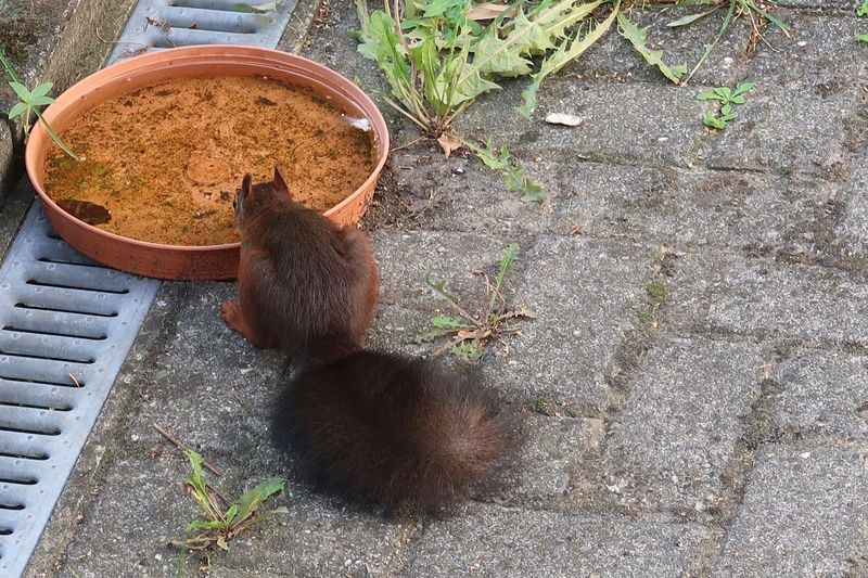 Squirrel Eichhörnchen High Angle View Nature Day No People Mammal Animal Animal Themes Plant One Animal Sunlight Outdoors Potted Plant Brown Rodent Animal Wildlife Growth Pets Footpath Metal Shadow
