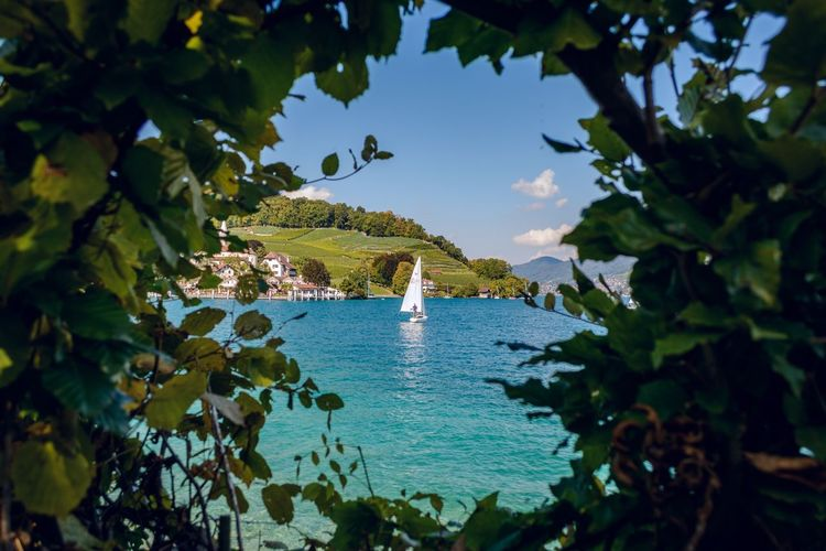 Sea Nature Water Tranquility Vacations Scenics Beauty In Nature Tourism Leaf Outdoors Tranquil Scene Travel Destinations Day Blue Nautical Vessel Sailboat Tree Beach Sky No People