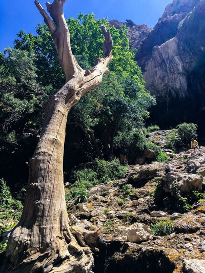 Tree Tree Trunk Scenics Tranquil Scene Tranquility Nature Non-urban Scene Mountain Beauty In Nature Growth Remote Solitude Rock Formation Outdoors Day Green Rocky Mountains Countryside Lush Foliage No People Bare Tree Landscape Rock Rock - Object Travel