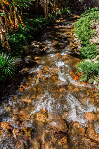 Day Plant Nature Tree Rock Water Forest Solid Rock - Object No People Land Flowing Water Scenics - Nature River Outdoors Flowing Environment Beauty In Nature Stream - Flowing Water Shallow Pollution