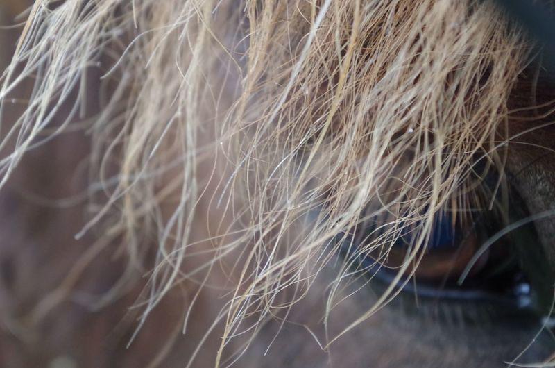 Auge <3 Pferd Pferde Animal Animal Body Part Animal Eye Animal Hair Animal Themes Close-up Day Domestic Domestic Animals Eye Of A Horse Eye Of Horse Focus On Foreground Hair Herbivorous Horse Human Hair Livestock Mammal Nature One Animal Outdoors Pets Selective Focus Softness Vertebrate