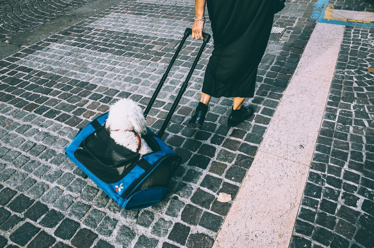 Low section of woman pulling dog in luggage on footpath