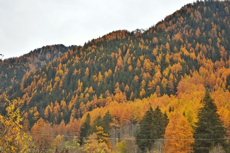 Scenic view of autumn trees and mountains against sky