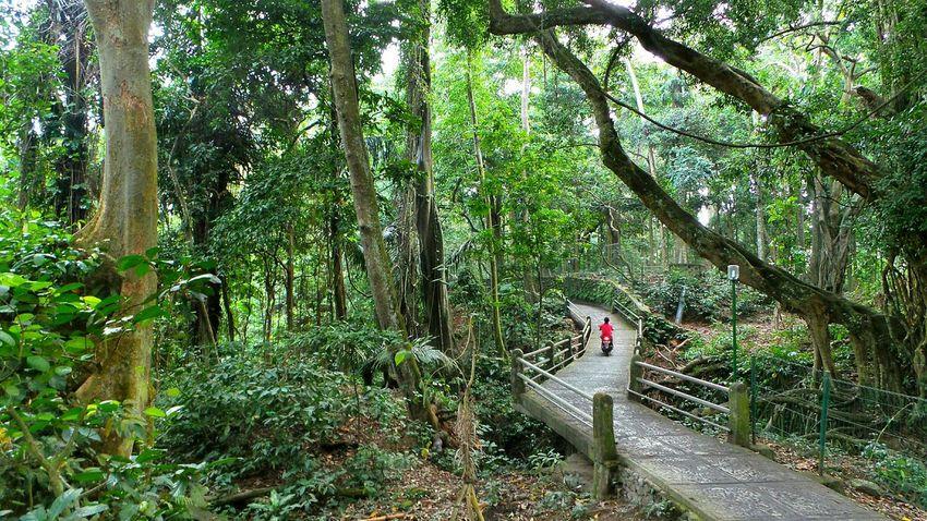 Bali- Ubud Bali Ubud Forest Jeanmart Bali 16:9 Verybalitrip Very Bali Trip
