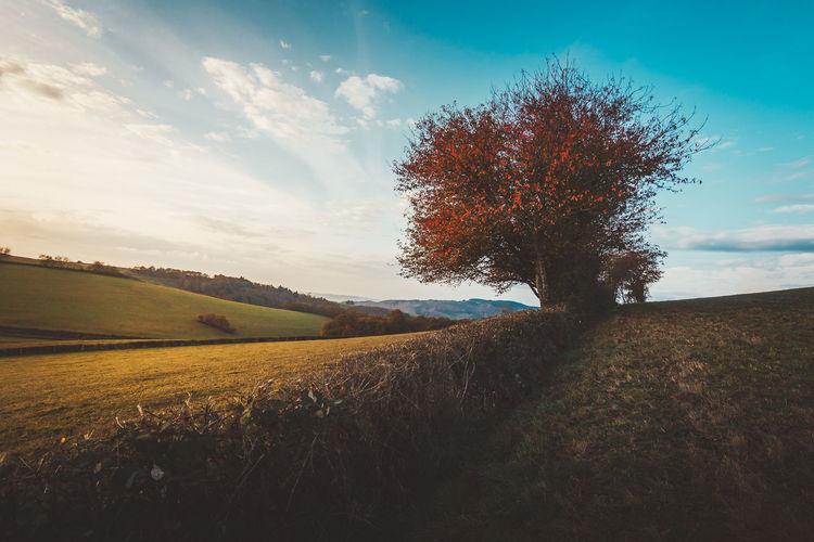 burgandy - France - 2016 ©sebastien.rossi Autumn colors Bourgogne France Beauty In Nature Burgandy Field Landscape Sky