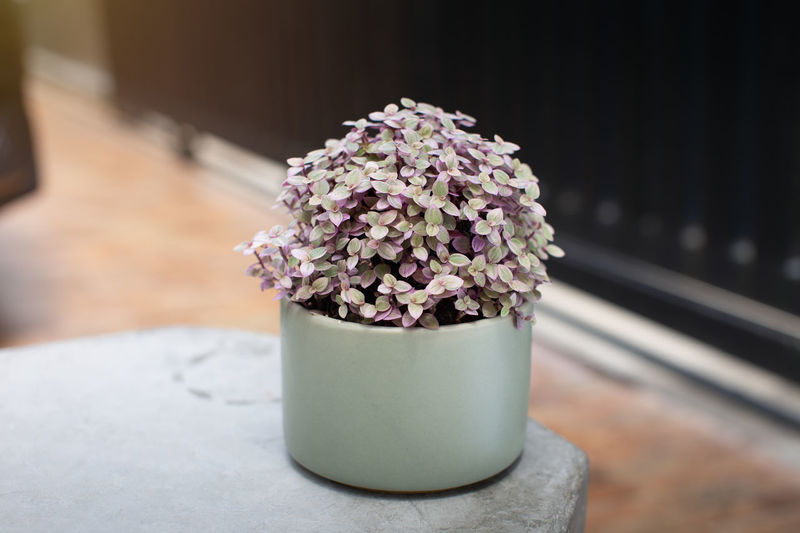 Close-up of flower pot on table