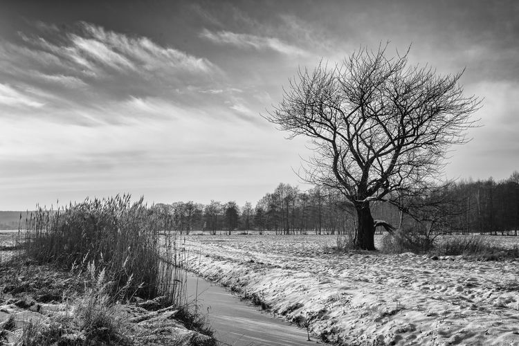 Winter Landscape Black And White Frozen Nature Deepfreeze