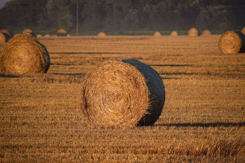 EyeEm Selects Bale  Field Hay Farm Agriculture Land Rural Scene Landscape No People Tranquility Tranquil Scene Nature Scenics - Nature Beauty In Nature Focus On Foreground Harvesting Crop  Sunlight Plant Geometric Shape