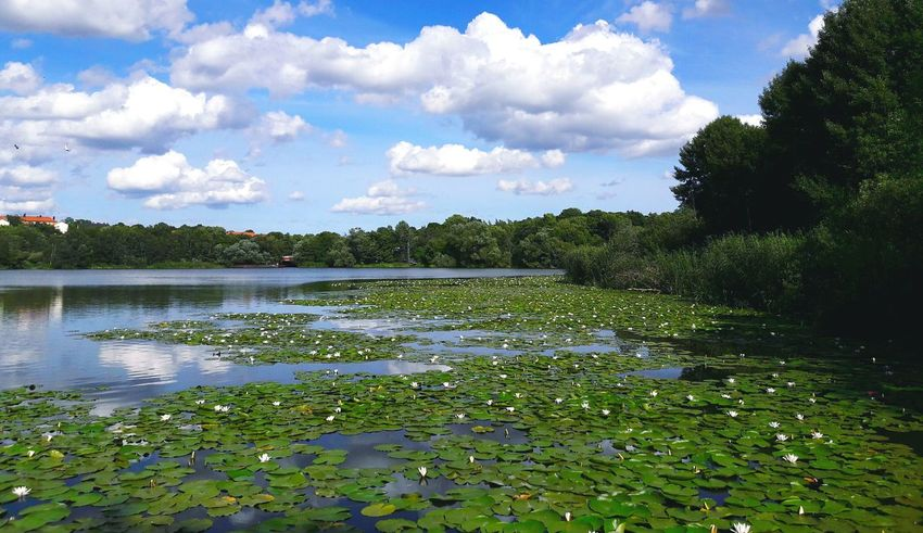 Water Reflections Water Lily Water Lake Lake View Landscape Nature EyeEm Nature Lover Nature Photography Naturelovers Trees Clouds And Sky 43 Golden Moments Clouds Sky Lotus Lotus Flower Green Plants Forest Beautiful Day Relaxing Reflections Summer Reflection