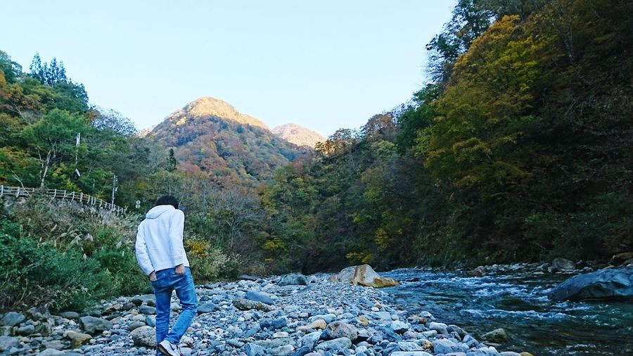 Rear view of man standing by river in forest against clear sky