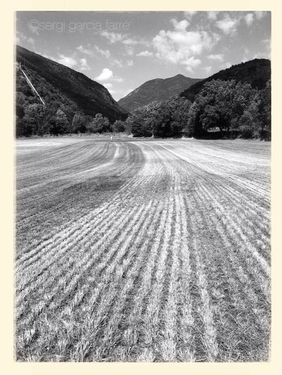 Landscape_bw