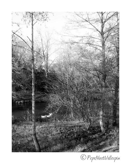 Poladesiero River Rionora Blackandwhite Photography Nature Photography Alonetime Nature Riverside Blancoynegro Blackandwhitephotography Pola De Siero Black & White Blackandwhite Tranquility Outdoor Photography