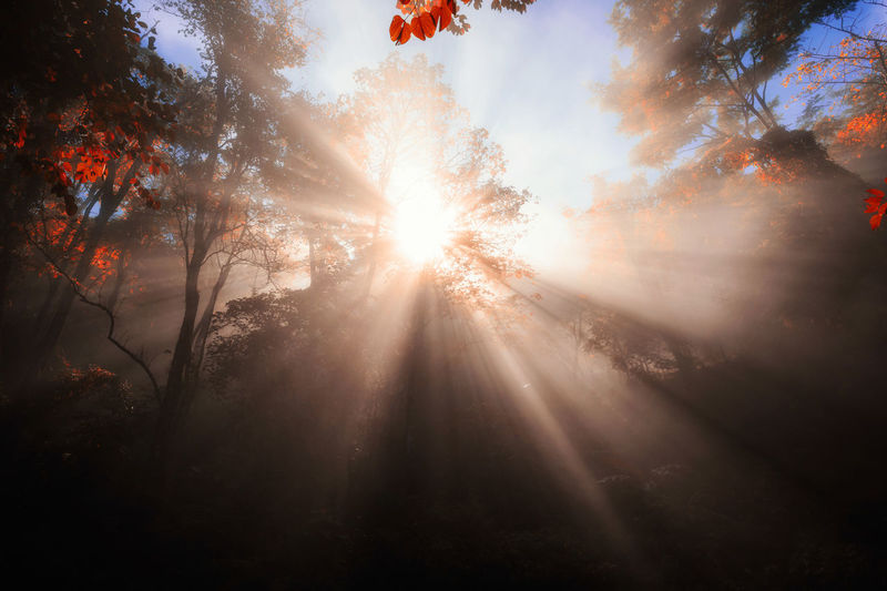 Sunlight beam through trees in forest during autumn