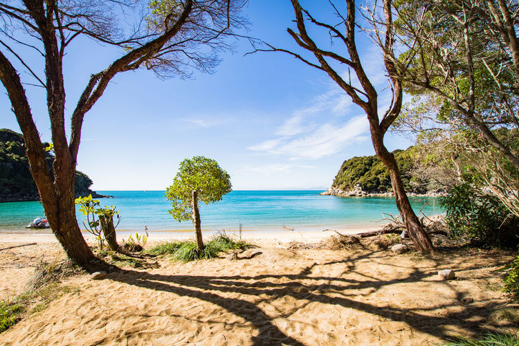beach at abel tasman national park in new zealand Abel Tasman Nationalpark Hiking Beach Beauty In Nature Blue Water Day Horizon Horizon Over Water Land Nature New Zealand No People Outdoors Pacific Ocean Plant Scenics - Nature Sea Sky Sunlight Tranquil Scene Tranquility Tree Tree Trunk Trunk Water The Great Outdoors - 2018 EyeEm Awards 10