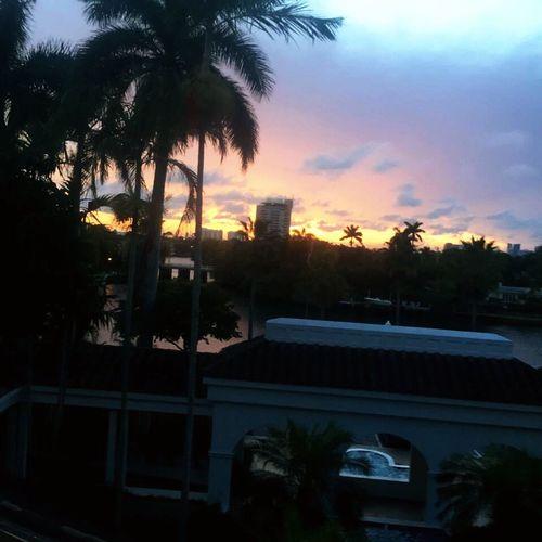 Hotel Hotel View Palm Tree Palm Trees FtLauderdale Beach View Views Sunset Sun Beautiful Tortuga Lifeisgood Tortugafest Florida EyeEmNewHere
