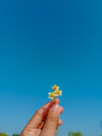 Close-up of hand holding flower against blue sky