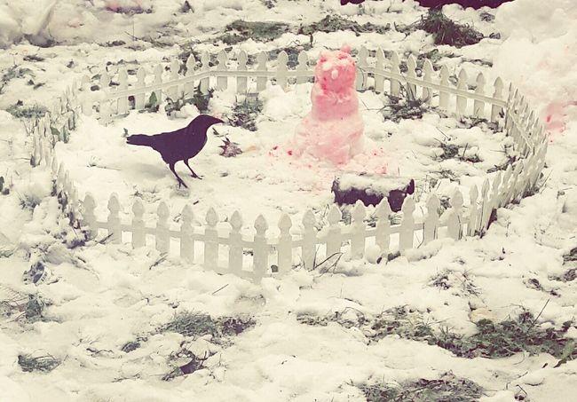 Petcrow Bird Crow Snow ❄ Snowman