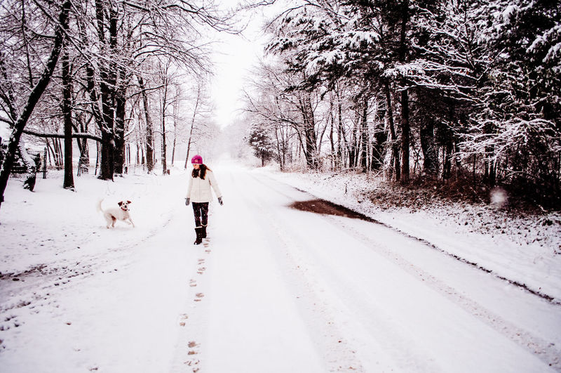Snow Winter Tree Cold Temperature Domestic Animal Themes One Animal Mammal Animal Pets Dog Domestic Animals Canine Plant Rear View Transportation Direction Walking Vertebrate The Way Forward Warm Clothing Outdoors Pet Owner Girl One Person