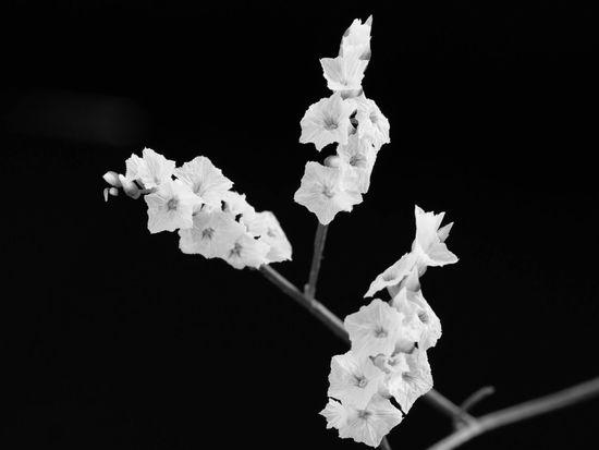 花 Flowerporn Bw_collection EyeEm Nature Lover Flowers Nature Blackandwhite Monochrome Simplicity Light And Shadow