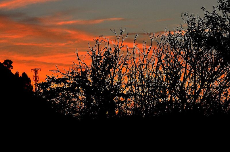 Albada a la reserva de Sebes a Flix Albada Sunset Sky Orange Color Silhouette Beauty In Nature Nature Plant