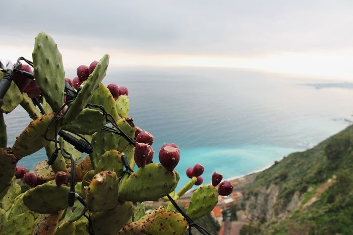 Sicily Italy Taormina Travel Travel Photography Sea Landscape Prickly Pear Indian Fig Fruit