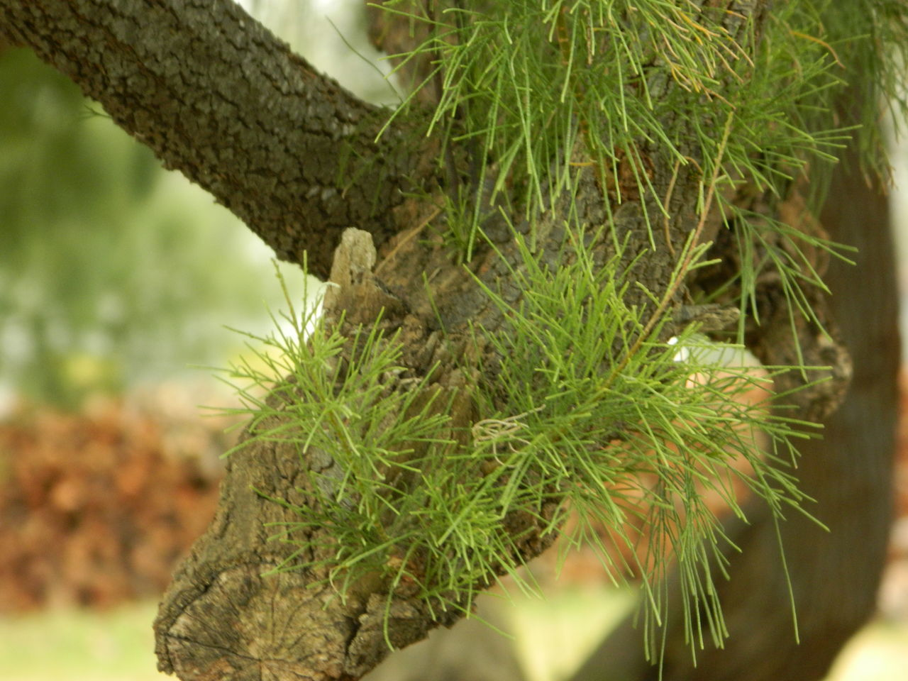 growth, nature, green color, focus on foreground, plant, close-up, no people, day, beauty in nature, outdoors, leaf, branch, tree