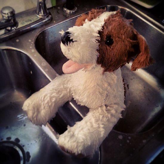 The best behave dog getting a bath! NOTAREALDOG Dog Stuffedanimal Buildabear justforfun