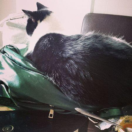 If it fits I sits ! Cat Purse Alma Omgsocute
