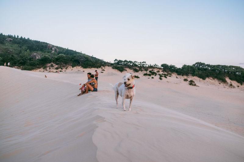 Beach Beauty In Nature Brasil Clear Sky Day Desert Dog Domestic Animals Dunes Florianópolis Full Length Mammal Men Nature One Person Outdoors People Running Sand Sand Dune Sky Sun Sunlight Sunset Tree