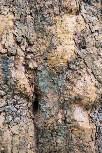 Hole Textured  Full Frame Backgrounds Rough Trunk Tree Trunk Close-up Plant Bark Tree No People Pattern Plant Day Natural Pattern Nature Outdoors Weathered Toughness Growth Brown Bark Stone Wall Textured Effect Lichen Natural Condition Woodpecker Abstract Backgrounds Knotted Wood Growing