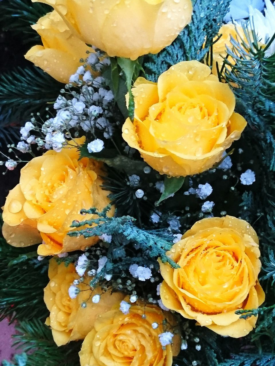 freshness, food and drink, food, flower, close-up, yellow, sweet food, no people, beauty in nature, dessert, indoors, fragility, flower head, ready-to-eat, day