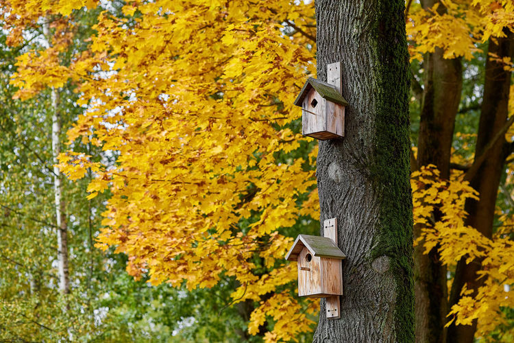Close-up of birdhouse on tree trunk during autumn