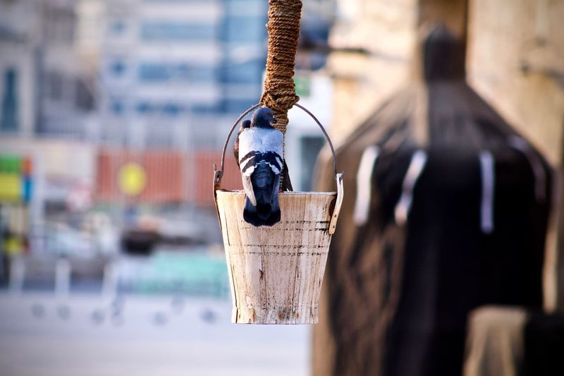 Close-up of pigeon perching on bucket hanging in city