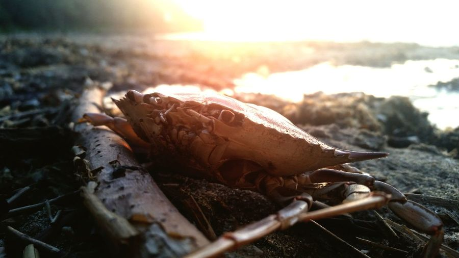 EyeEm Selects Animal Wildlife Animals In The Wild One Animal Nature Sea No People Outdoors Day Sunset Beach Animal Themes Landscape Close-up Beauty In Nature Water Sea Life UnderSea Crab Nature Tadaa Community Eye4photography