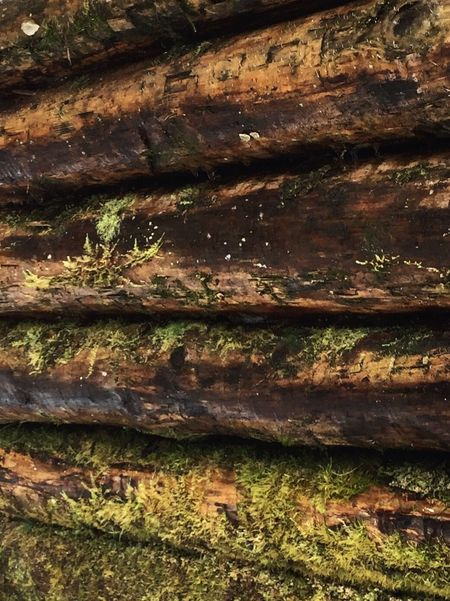 Day No People Backgrounds Outdoors Wood - Material Full Frame Textured  Growth Close-up Tree Trunk Nature EyeEm Ready