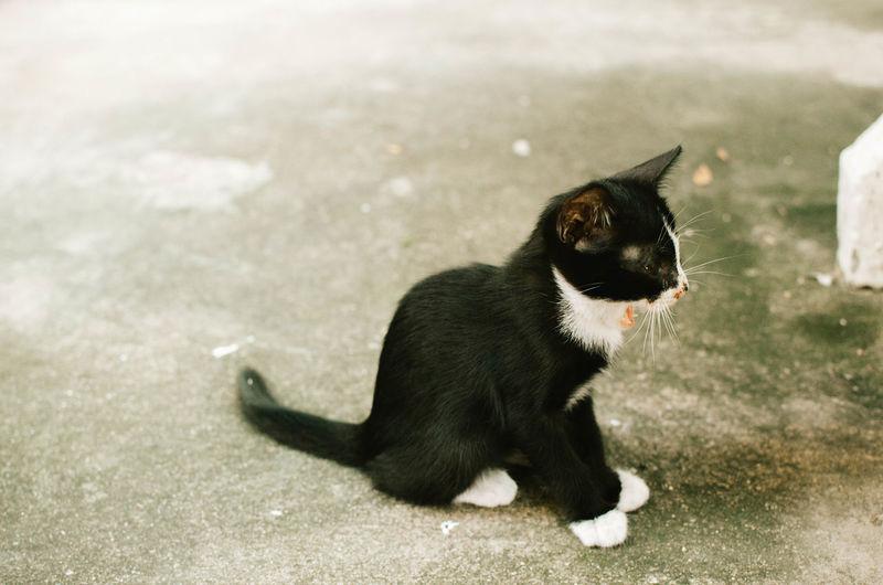 Black kitten sitting on walkway