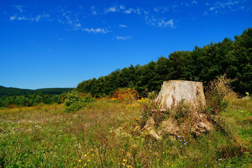 At the stump of the huge dead tree Dead Tree Wood Beauty In Nature Day Field Grass Growth Landscape Mountain Nature No People Outdoors Pilis Pilisszántó Scenics Sky Stump Summer Tranquility Tree Trunk