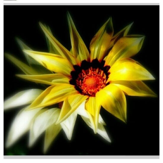 Blumen im Schatten
