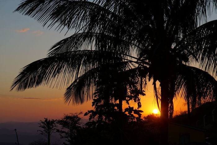 Sem filtro Sol Sun Sole Soleil  Sunset Silhouette Beauty In Nature Tree Ceará Brazil Brasil ♥ Natureza Nature Montanha Mountain Landscape Paisagem Sunset Tree Nature Silhouette No People Scenics Outdoors Dramatic Sky Sky Beauty In Nature Day EyeEmNewHere The Great Outdoors - 2017 EyeEm Awards