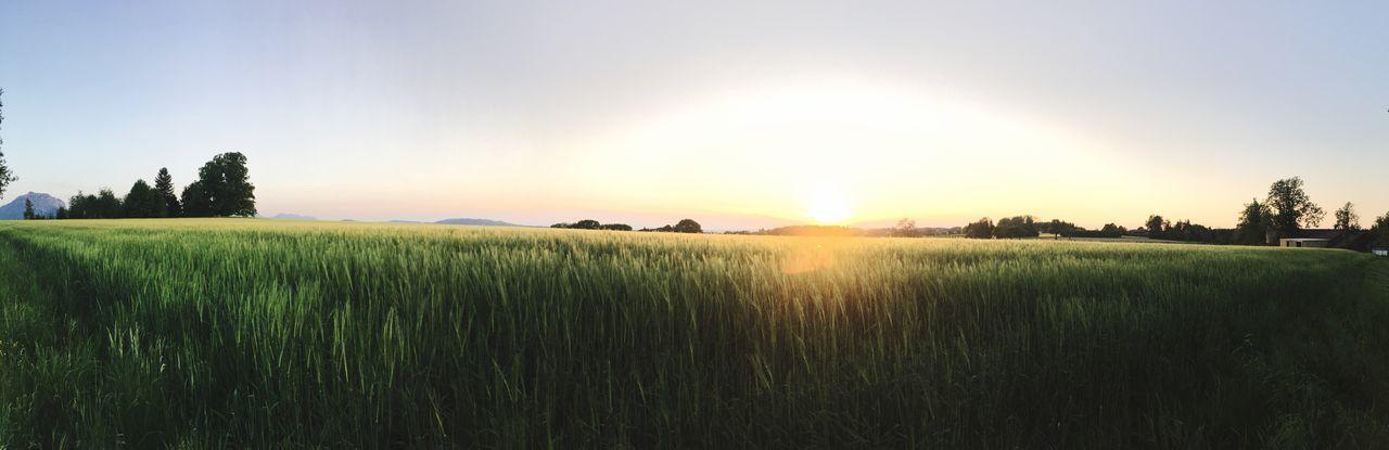 Sunset Austria Upper Austria  Fields Nature Landscape Horizon