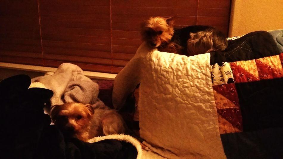 ninjas Dogs Of EyeEm