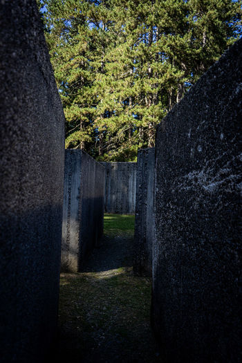 Trees in cemetery