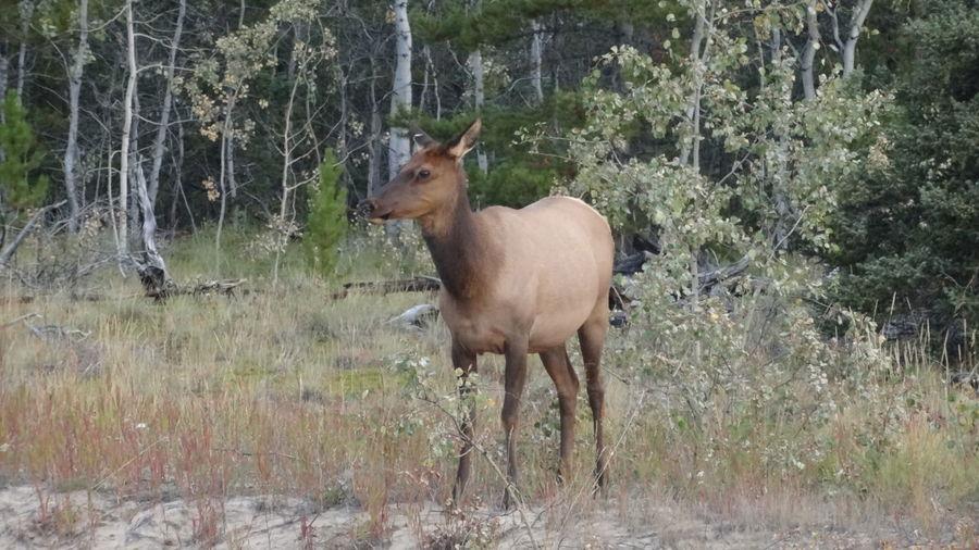 Canada Deer Forest Kluane National Park & Reserve Tree Wildlife