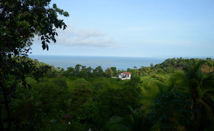 Costa Rica Manuel Antonio Beach Beauty In Nature Blue Building Exterior Built Structure Day Green Color Growth Horizon Over Water Nature No People Outdoors Palm Tree Plant Scenics Sea Sky Tranquil Scene Tree Water