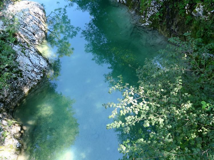 Riverside Beauty In Nature Branch Day Flower Growth High Angle View Lake Leaf Nadiža Nature No People Outdoors Plant Reflection Scenics Sky Tranquil Scene Tranquility Tree Water The Week On EyeEm Lost In The Landscape