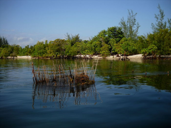 Beauty In Nature Day Mangroves Nature Outdoors Reflection Sand Sea Tranquil Scene Water Waterfront