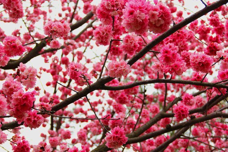 云南大学 Flower